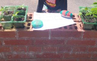 brick wall with small pepper and cucumber plants on it being given away or in exchange for a donation to Paul's Place